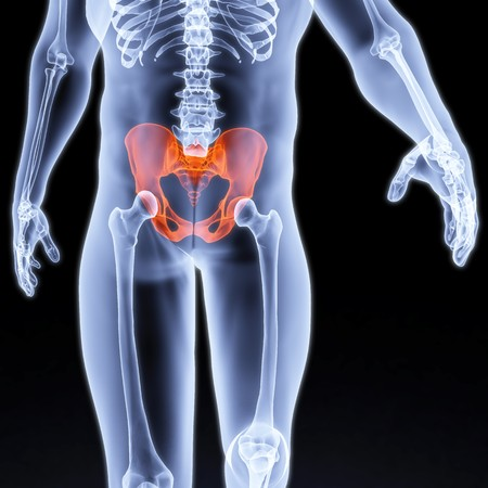 femur: male pelvis under the X-rays. pelvis is highlighted in red. Stock Photo