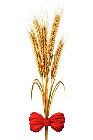 golden spikes of wheat tied with a red satin bow. with clipping path. photo
