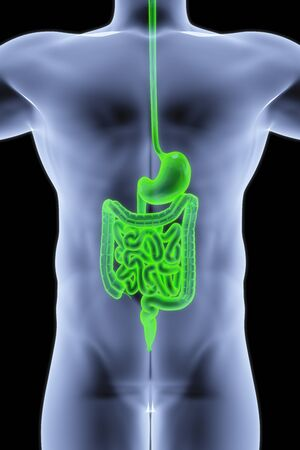 the human body by X-rays. intestine highlighted in green. photo