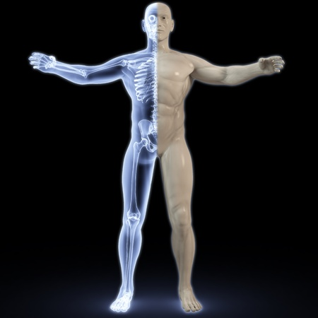 halves: part of the male body under X-rays. 3d image.