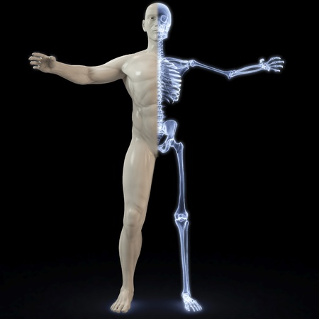 skeletal muscle: part of the male body under X-rays. 3d image.