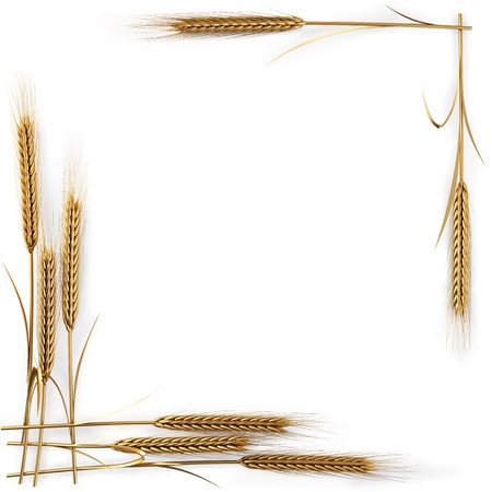 frame of golden spikelets. isolated on white.  photo