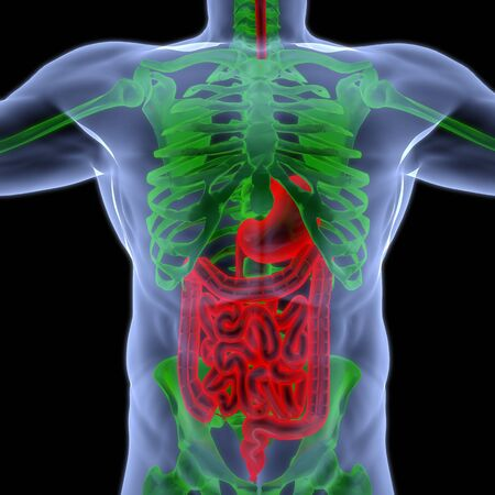 the human body by X-rays. intestine highlighted in red. photo