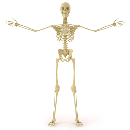 huesos: esqueleto humano. aislados en blanco.