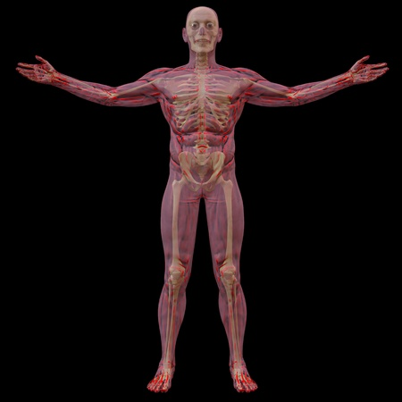 physical therapy: translucent human body with visible bones. isolated on black.