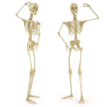 osteoporosis: esqueleto humano. aislados en blanco.
