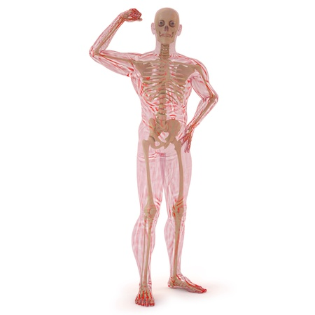 strong arm: translucent human body with visible bones. isolated on white. Stock Photo