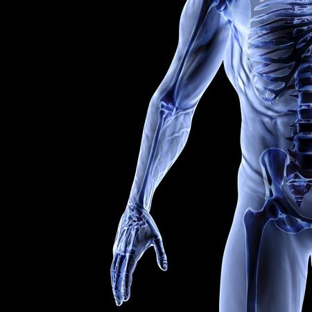 scheletro umano: Uomo Archivio Fotografico