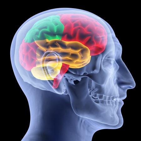 menschliche Gehirn mit Röntgenstrahlen. isoliert auf schwarz.