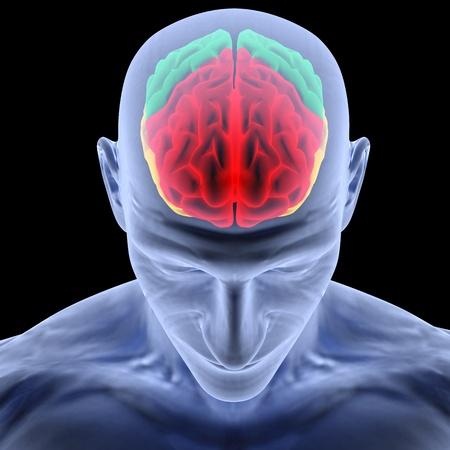 cerebro humano: cerebro humano por rayos X. aislado en negro.