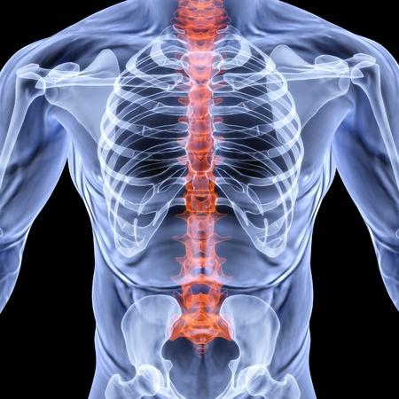 dolor en el pecho: hombres de torso bajo rayos X. columna vertebral aparece resaltado en rojo. aislado en negro.