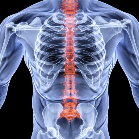 radiology: torso men under X-rays. backbone is highlighted in red. isolated on black. Stock Photo