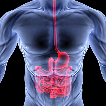 organi interni: il corpo umano da raggi X. intestino evidenziato in rosso. Archivio Fotografico