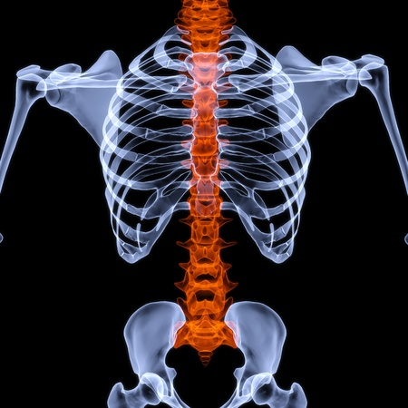 radiology: human skeleton under the X-rays. backbone is highlighted in red. isolated on black. Stock Photo
