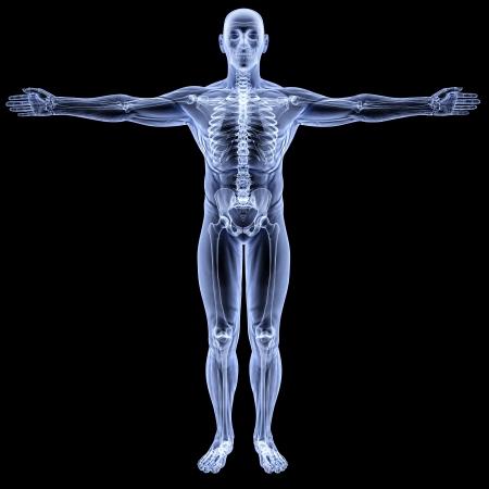 esqueleto humano: cuerpo masculino bajo los rayos X. aislados en negro Foto de archivo