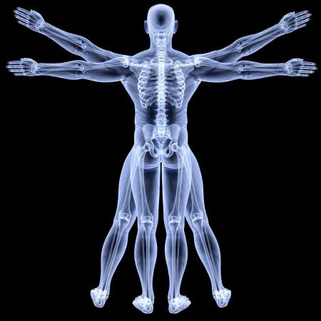 vitruvian man: Hombre de Vitruvio en rayos-X. aislados en negro.