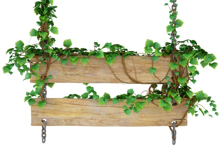 wooden sign hanging on the chains and overgrown with ivy. isolated on white.