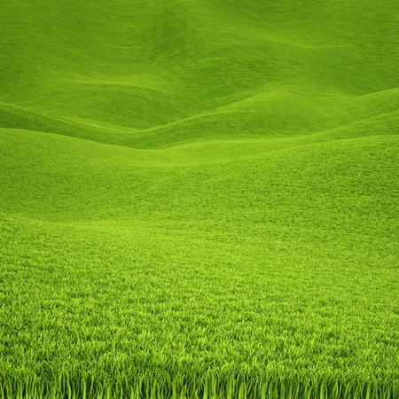 carpet grass: landscape is covered with green grass.