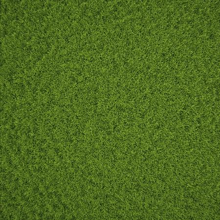 Green grass field background texture. Stock Photo