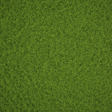 front views: Green grass field background texture. Stock Photo