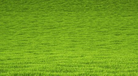 landscape is covered with green grass. photo