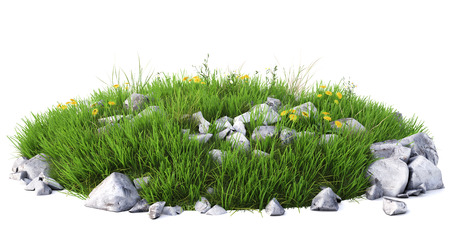 flowers close up: Natural grass arena isolated on white background Stock Photo
