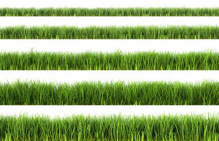 Groen gras geïsoleerd op witte achtergrond  Stockfoto - 28353681
