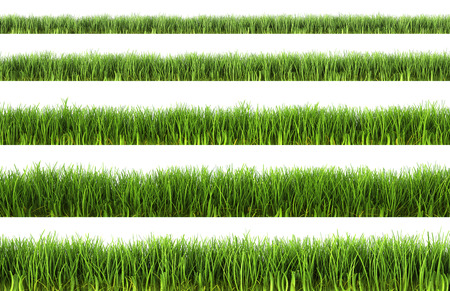 Herbe verte isolée sur fond blanc  Banque d'images - 28353681