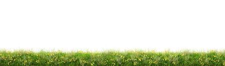Groen gras met bloemen. geïsoleerd op een witte achtergrond.