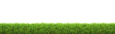 흰색 배경에 고립 된 녹색 잔디 스톡 콘텐츠