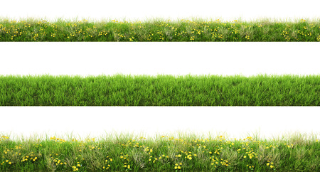 Green grass with flowers. isolated on white background.