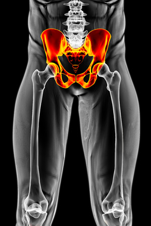 doctor exam: mans body under X-rays. pelvis are highlighted in red. 3D illustration.