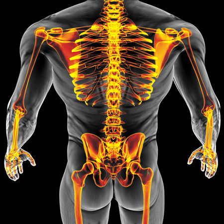 mans body under X-rays. bones are highlighted in red. 3D illustration.