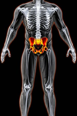 adult bones: mans body under X-rays. pelvis are highlighted in red. 3D illustration.