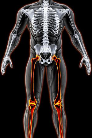 mannelijk lichaam onder de röntgenstralen. benen zijn in rood gemarkeerd. 3D illustratie. Stockfoto