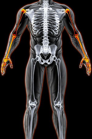 male body under the X-rays. Hands are highlighted in red. 3D illustration.