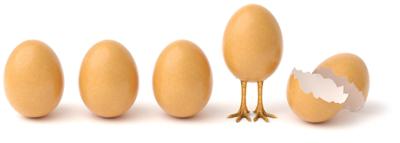 Row of chicken eggs. One egg with golden chicken feet and one Broken Egg Shell. isolated on a white background. 3d rendering.