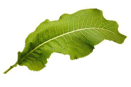Large decorative green leaf on white background Stock Photo