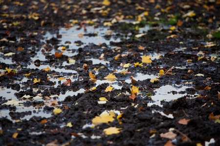 A lot of fallen autumn leaves in a puddle of mud and photo