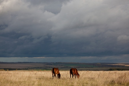 Two horses grazing in the autumn field photo
