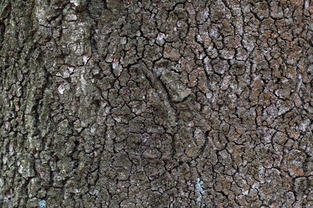 wrinkled rind: Gray striped bark in the wild forest Stock Photo