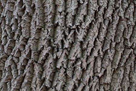 wrinkled rind: The trunk of an old tree with wrinkled bark