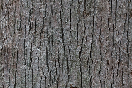 wrinkled rind: The bark of an old tree in the forest closeup