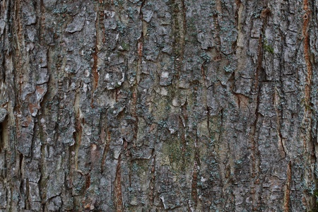 wrinkled rind: Wrinkled brown bark on the trunk Stock Photo