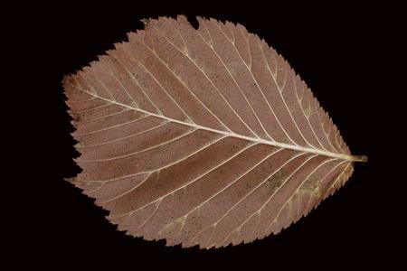 daremny: Pralnia fallen brązowy jesienią liści na czarnym tle