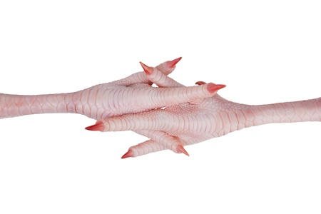 animal vein: Crossed each other pink chicken feet with claws on a white background