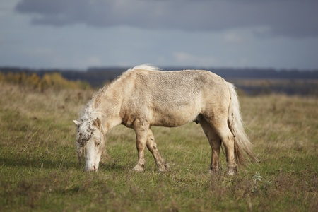 Small ponies grazing in the meadow autumn day Stock Photo - 11673709
