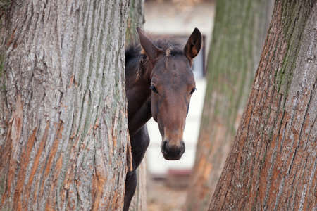 Small foal hiding in the trees on the street Stock Photo - 12199832