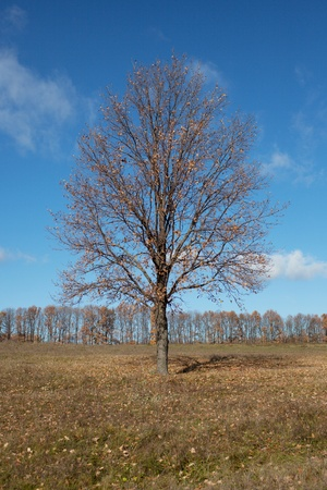 Lonely tree with fallen leaves in the field Stock Photo