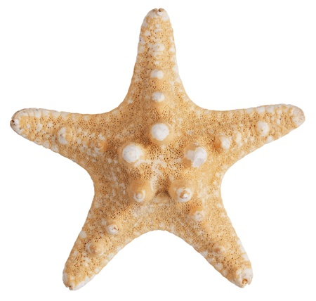 grooves: Fossilized sea star on a white background Stock Photo